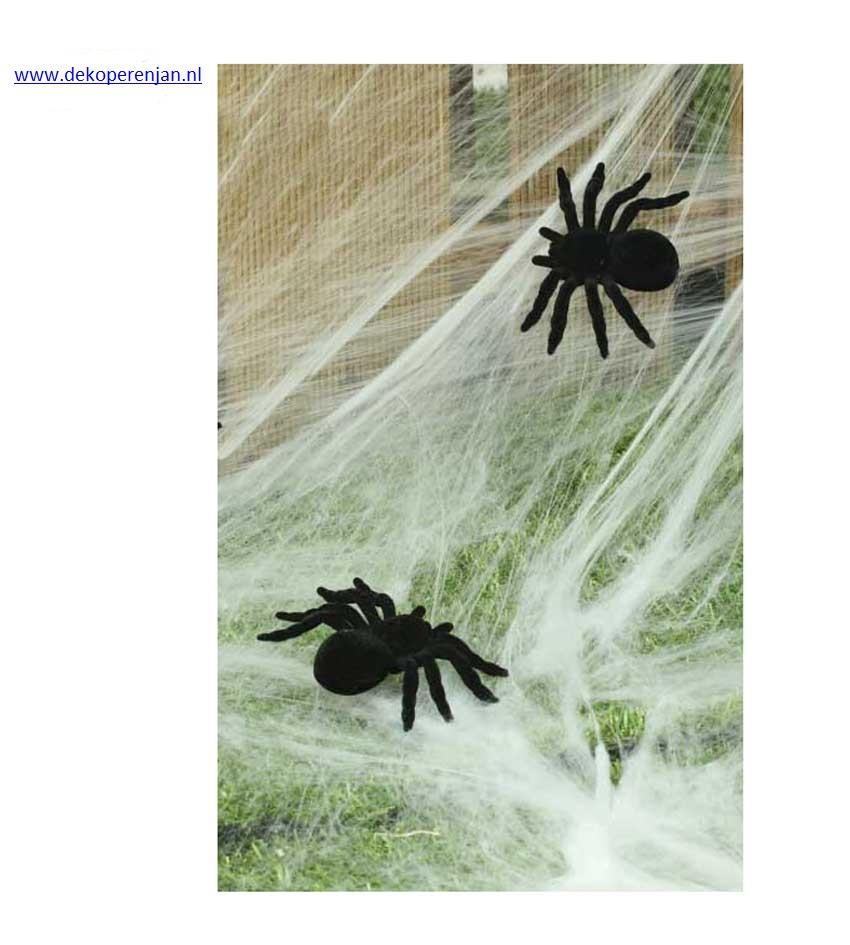 2 Spinnen