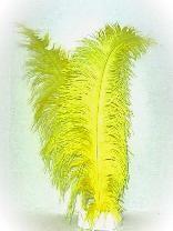 Spadonis veer geel  50cm