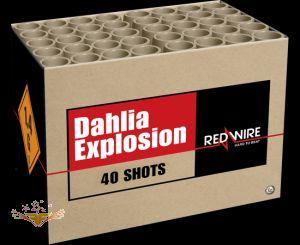 Dahlia Explosion